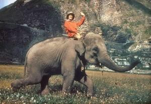 elefant-ember-panikbetegseg